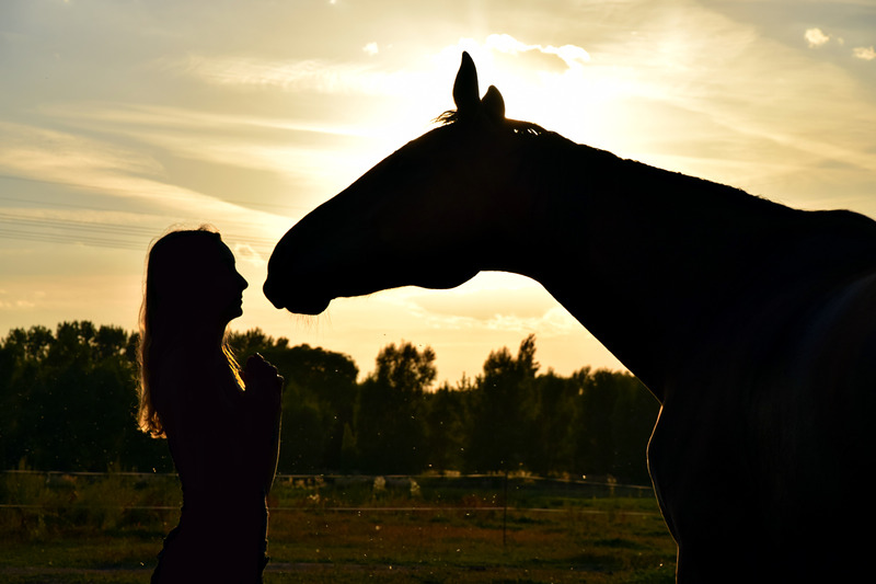 """Volteggio equestre come terapia: """"Horses & Butterflies"""", azione pilota di SPHERE"""